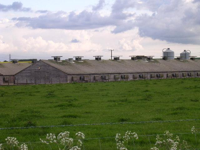 Tealing poultry farm