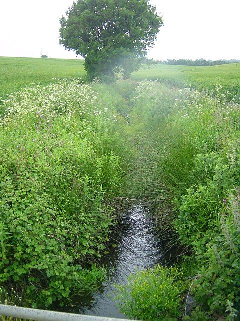 Brook near Cambray Farm