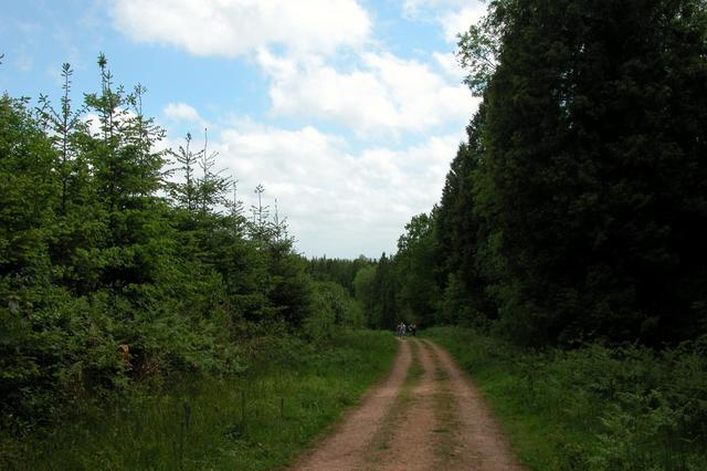 Forestry track through  Lodge inclosure, Alice Holt forest