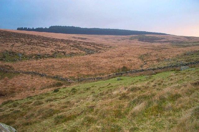 Dartmoor bog