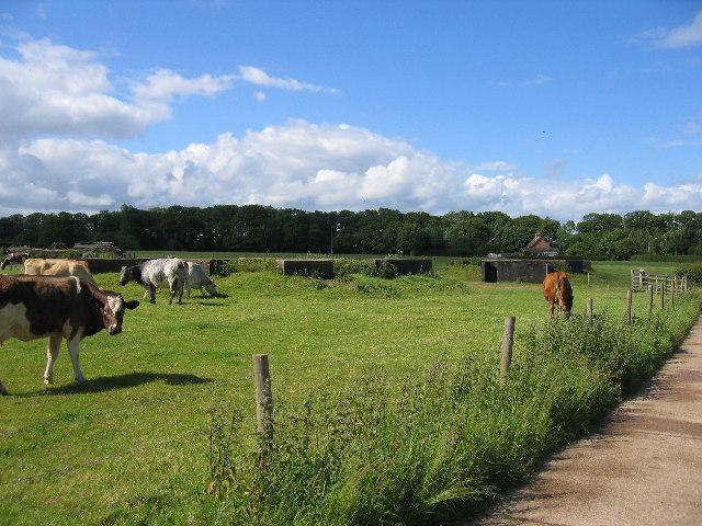 Goodrest Farm defences