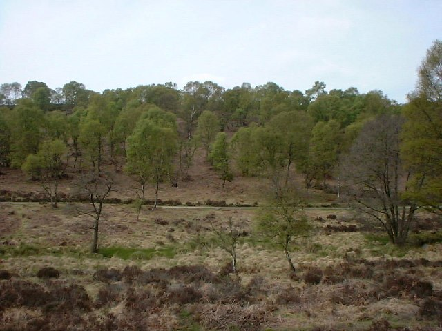 Sherbrook Valley, Cannock Chase