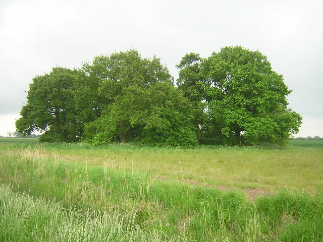 Copse off Three Bridges Lane, Saltfleetby St Peter
