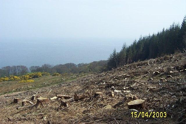 Clearfelled timber, Isle of Arran