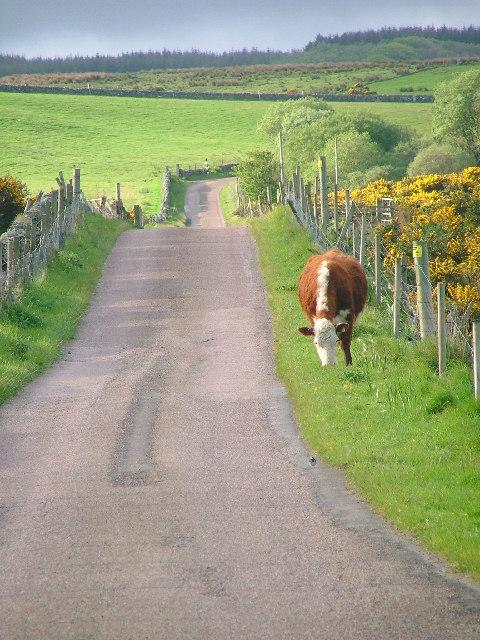 Road to Corran Farm