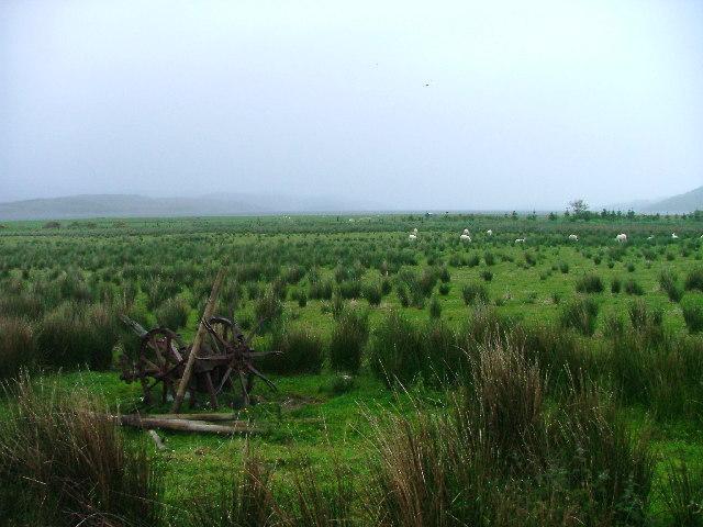 Low pasture land.