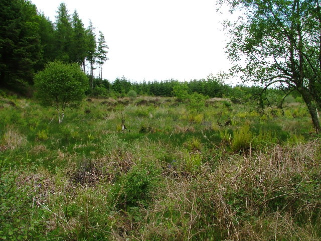 Clearing, Achnabreck Forest