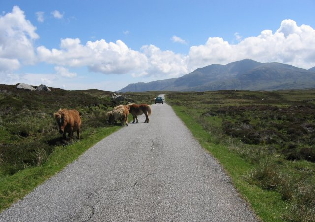 Ponies on the Loch Sgioport road.