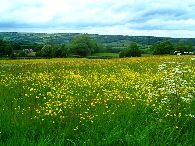 Meadow near Wilday Green