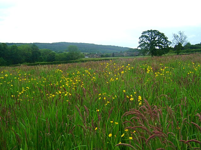 Meadow near Crowhole Brook