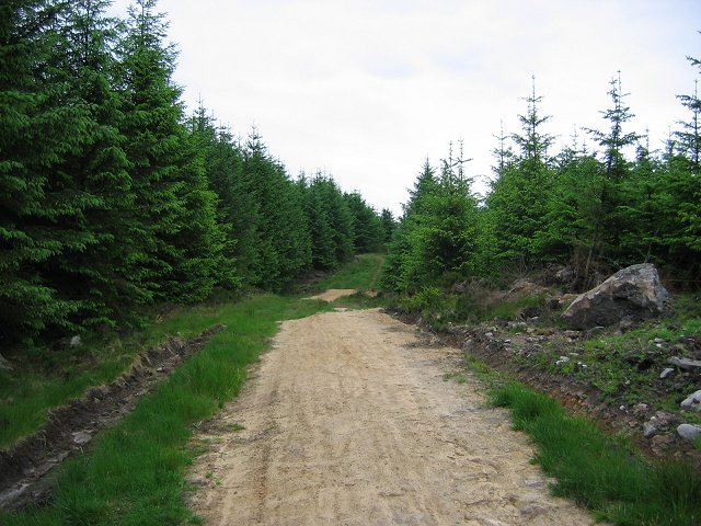 Forestry near Long Crag