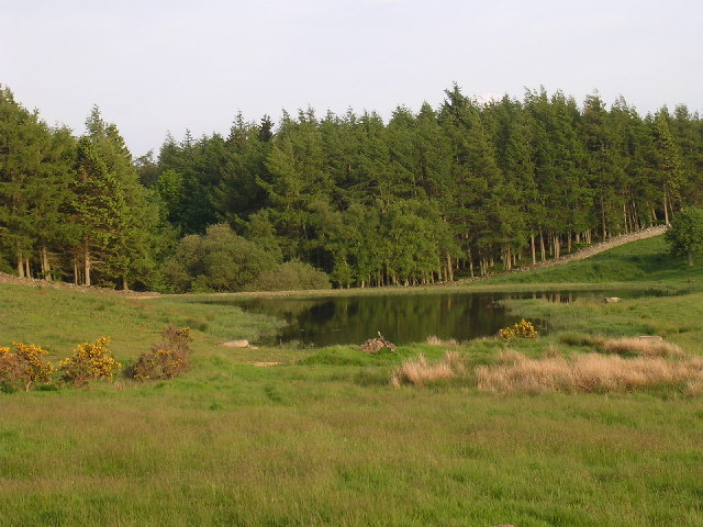 Wetland near Balbeuchley