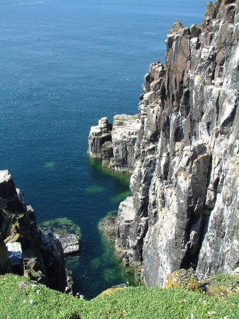 Sea Cliffs, Isle of May