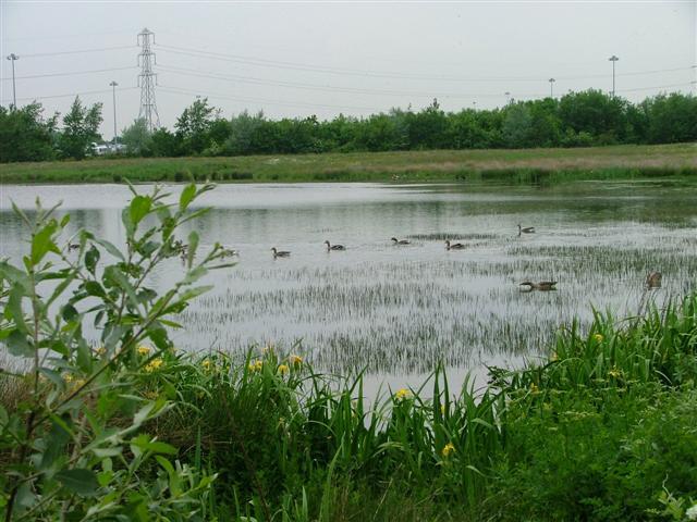 Barmston Pond
