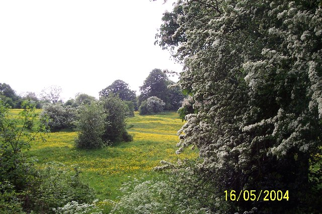 Spring in Newbiggin Pits