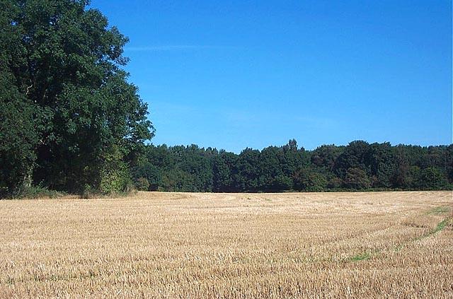 Near Misk Farm, Watnall