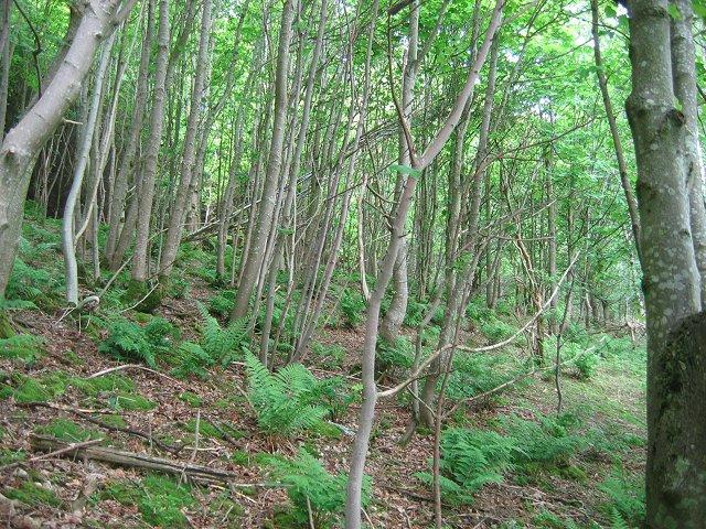 Wrae Wood