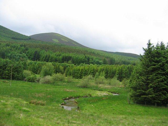 Forestry, Glenhighton.
