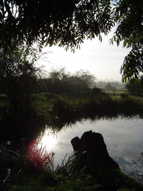 Pond, Debach, Suffolk