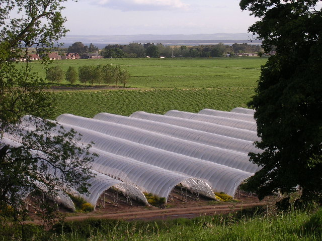 Polytunnels on Balhungie Farm