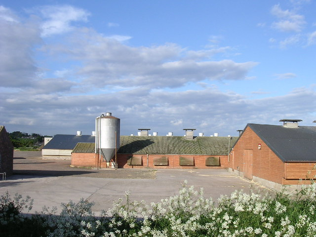 Battery henhouses at Viewfield
