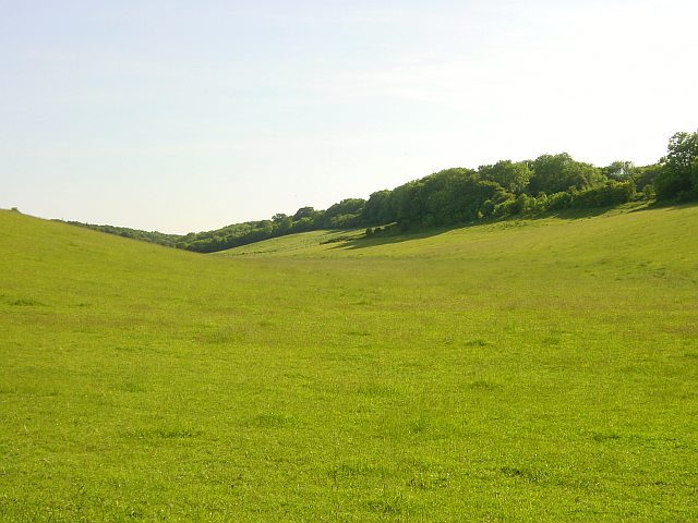 Downland Meadow near Wrinsted Court