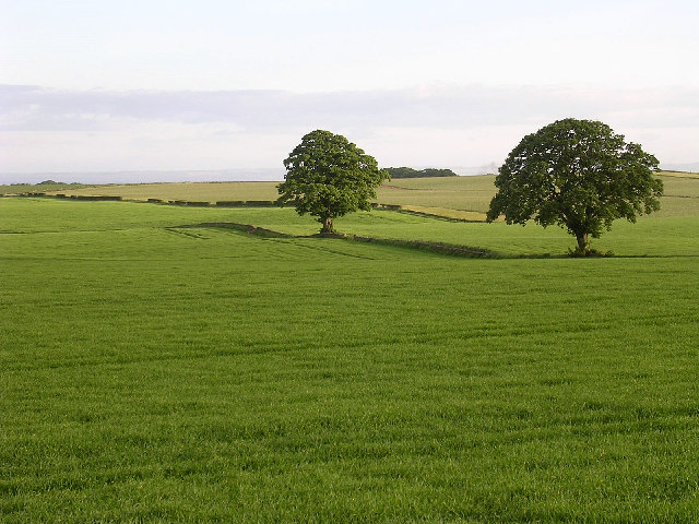 Fields of green and two trees