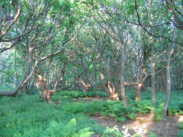 Harestanes Wood