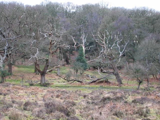 Pinnick Wood