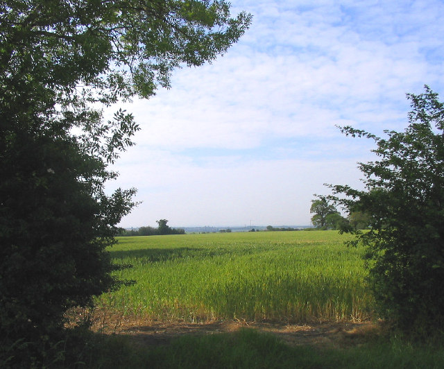 Field, Codham Hall Lane, Great Warley, Essex