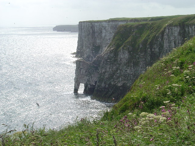 Cliffs at Bempton