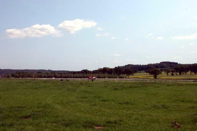 Horses at New Barn Farm