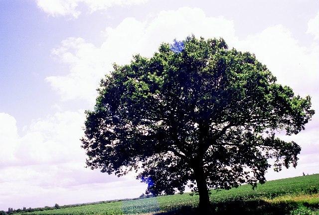 Weycock Hill