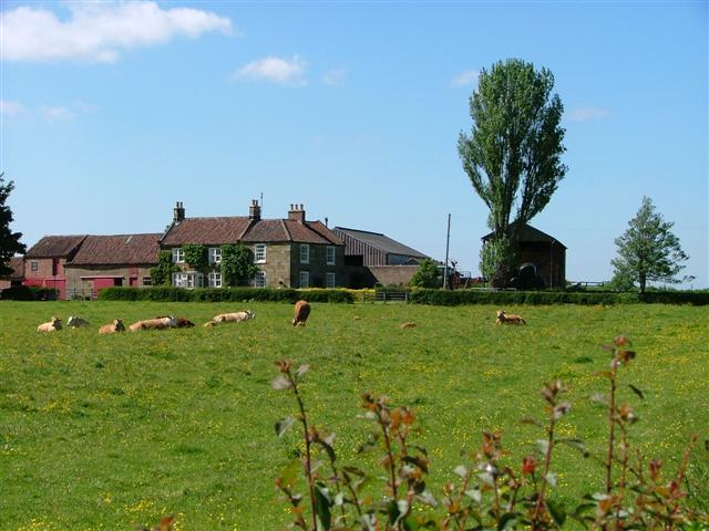 Holly Farm, Easby