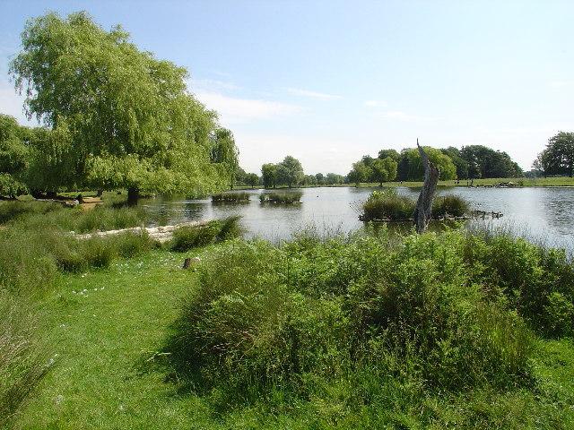 Heron Pond, Bushy Park