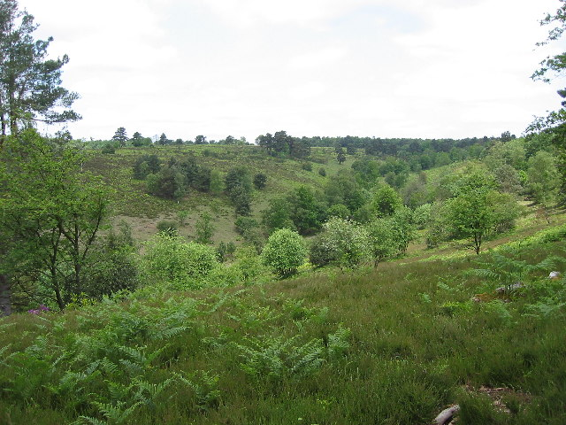 Part of Hindhead Common to the south of the A3