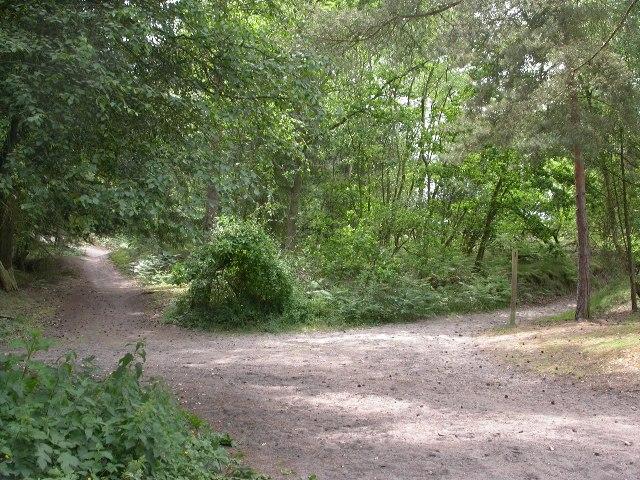 Edge of Frensham Common