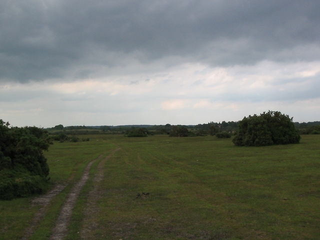 Plaitford Common