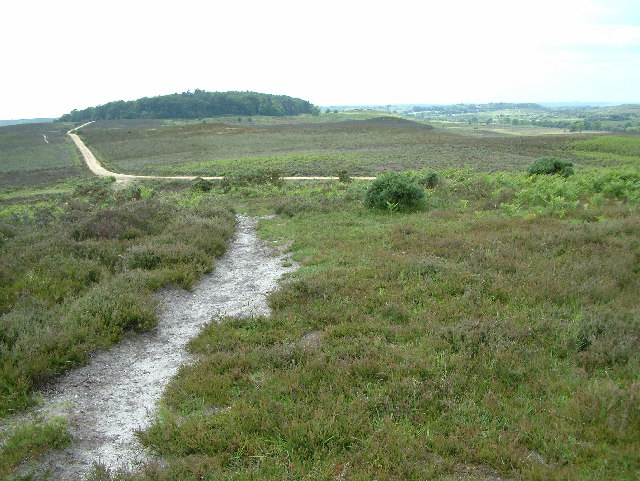 View towards Watergreen Bottom, New Forest