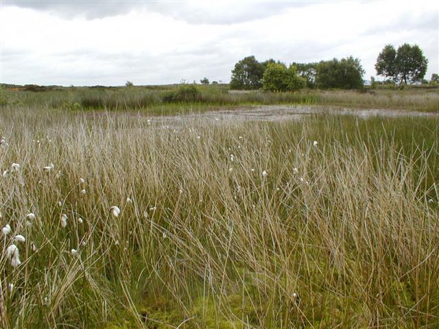 Carr Pond, Eston Moor