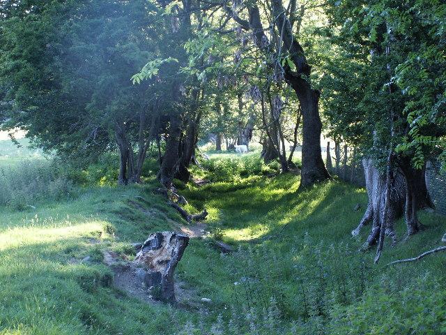 Old trackway / Bridleway, near Llety Llwyd