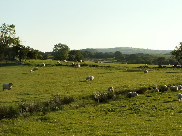 Fields near Cynull Mawr