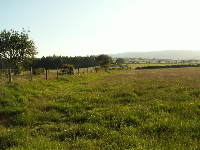 Grassland near Penycefn