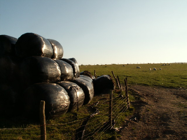 Silage bales and pasture near Pen-y-cwm