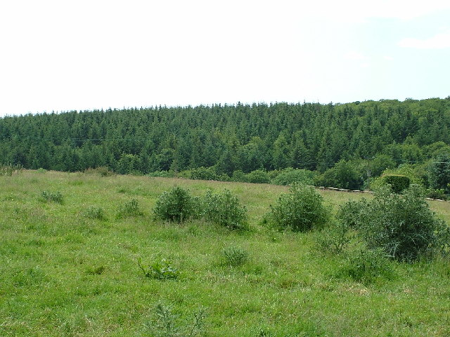 Bear Wood
