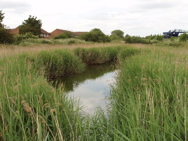 Pond and reeds by Western Avenue, Greenford