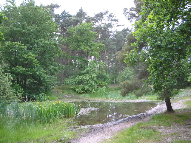 Wokefield Common