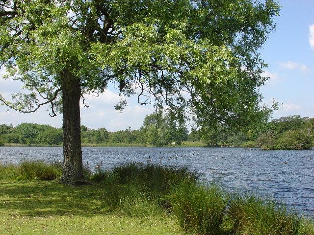 Pen Ponds, Richmond Park