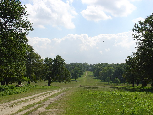 Richmond Park looking towards the White lodge