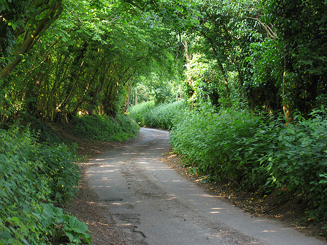 Country Lane near Grazeley